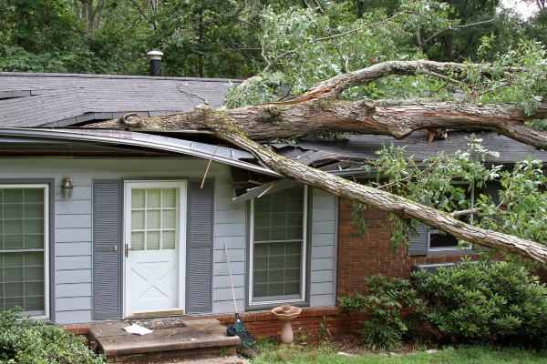 Tree-Damaging-The-Roof-of-a-Home