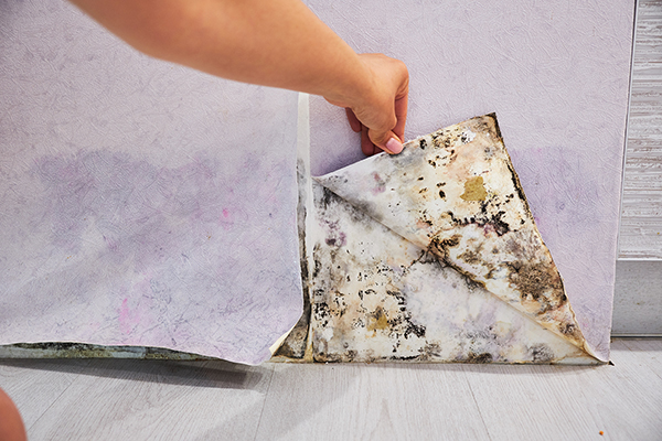 A peeled paint due to water damage.