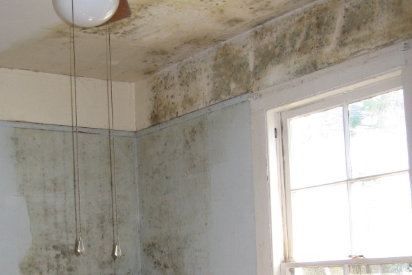 indoor mold caused by massive mold leak